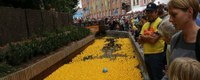 Tweede eendjeskoers op Demer in Diest
