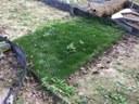 Grasstrook van 2 m breed, bestaande uit grasmatten.