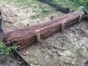 Dam van wilgentenen van ongeveer 50 cm hoog en 20 tot 30 cm ingegraven. De dam bestaat uit bundels wilgentenen, verankerd met een dubbele rij houten palen.