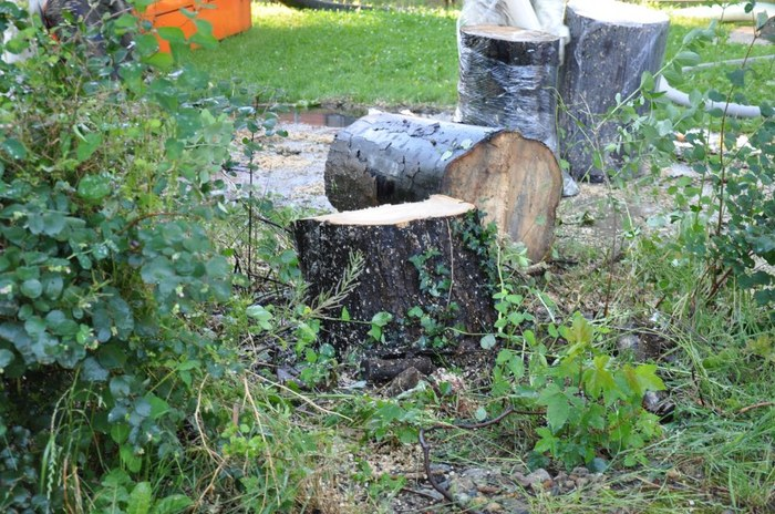 bomen-rooien-diest13.jpg