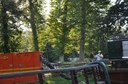 bomen-rooien-diest2.jpg