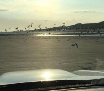 Wegvliegende meeuwen op het strand (foto vanuit jeep)