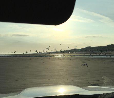 Wegvliegende meeuwen op strand