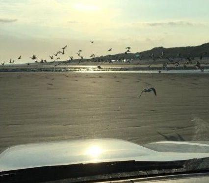 Wegvliegende meeuwen op het strand