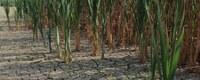 Maak kans op Vlaamse subsidie met jouw water(be)sparend bedrijfsproject