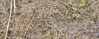 Microplastics in oppervlaktewater: laag tot verwaarloosbaar risico