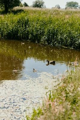 Lage debieten waterlopen