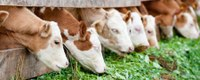 Berekening ammoniakemissie in de landbouw verfijnd