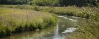 Biota-meetnet toont overschrijdingen milieukwaliteitsnormen