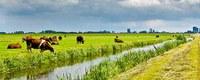 Nitraat en fosfaat in water blijft probleem in landbouwgebied