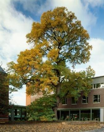 Kantoorgebouw Aalst boom