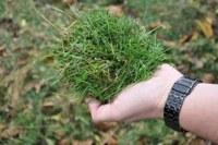 Mulch van gras
